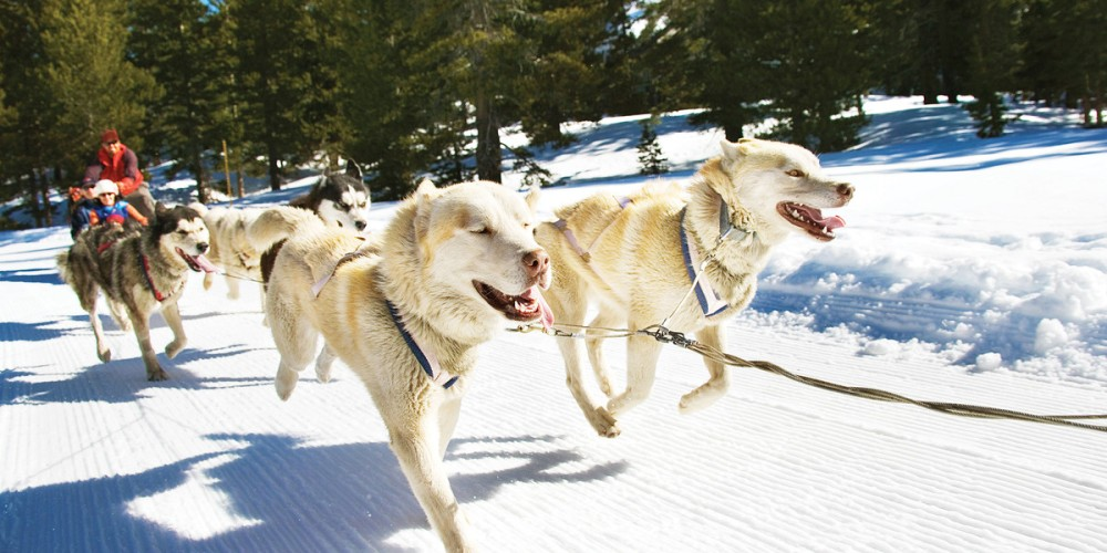 dtnemail-adventures-by-disney-north-america-winter-in-wyoming-long-weekend-hero-01-iditarod-sled-dogs-e7f4c